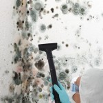 Black-Mold-Remediation-Pacifica
