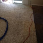 Pacifica-Traffic-Area-carpet-cleaners