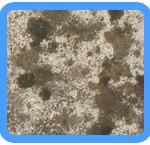Water-Mold-Removal-Pacifica